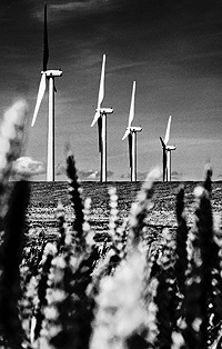 Rows of windmills rise above wheat fields in Eastern Oregon. Renewable energy gains in popularity every year.