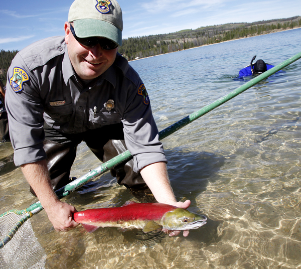 An U.S. Department of Fish and Game officer releases a sockeye salmon into Redfish Lake last autumn as part of a recovery program to help boost salmon stocks in the Pacific Northwest. A federal judge is in the midst of ruling on whether the government's recovery plan for salmon and steelhead is adequate.