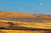 (Mark Rozin) Wind farm turbines rise above wheat fields in Eastern Washington. More farmers are turning to smaller turbines to supply energy for their farm instead of the power grid.