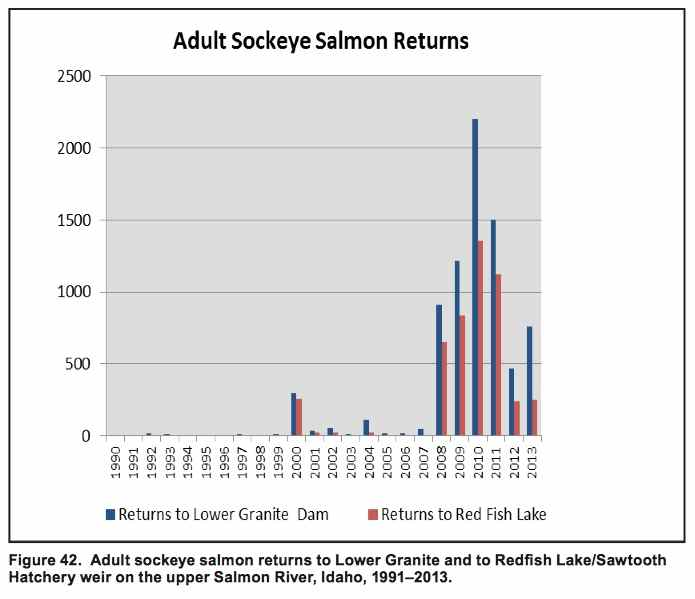 Graphic: Adult sockeye salmon returns to Lower Granite Dam and to Redfish Lake weir on the upper Salmon River, Idaho, 1991-2013.